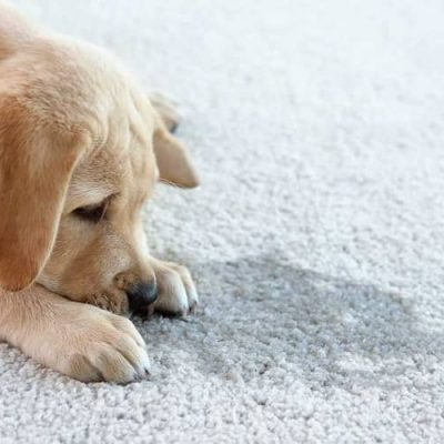 Removal of Pet Stains and Odors